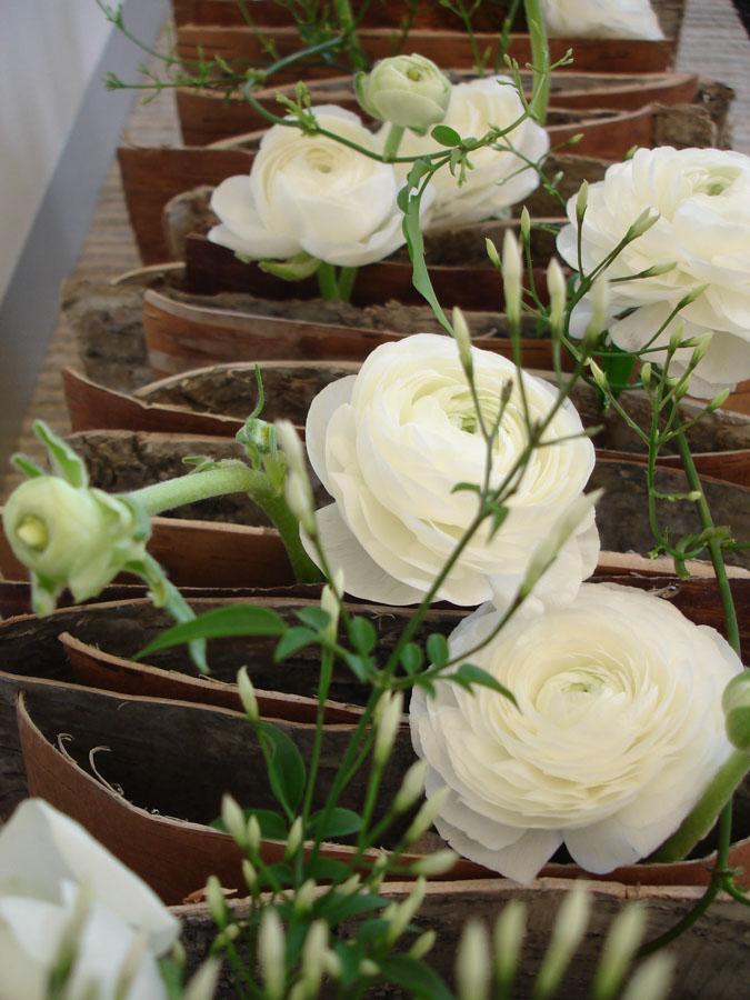 Róże przedzielane deseczkami