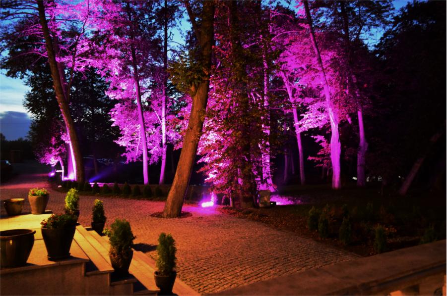 Fioletowe podświetlenie drzew