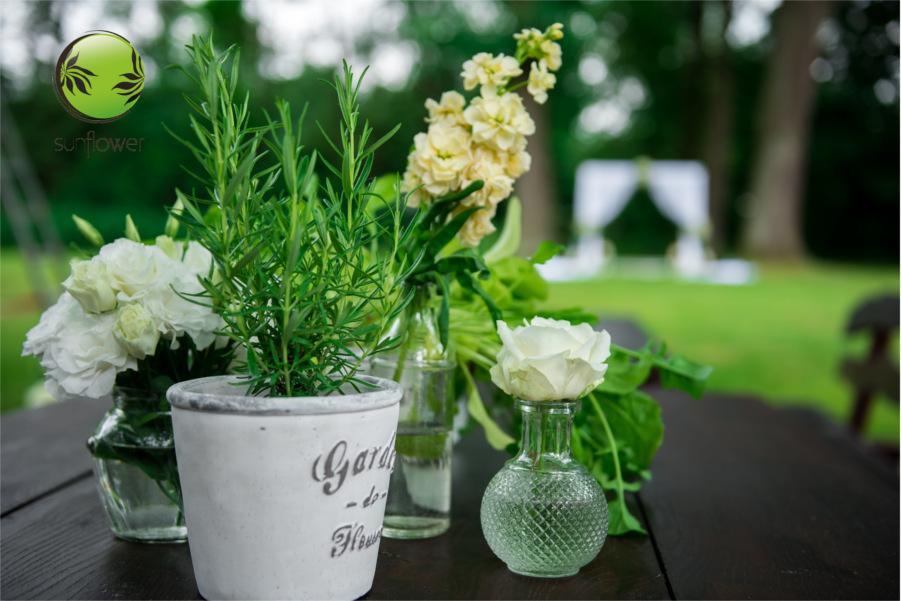 Rośliny w ozdobnych doniczkach