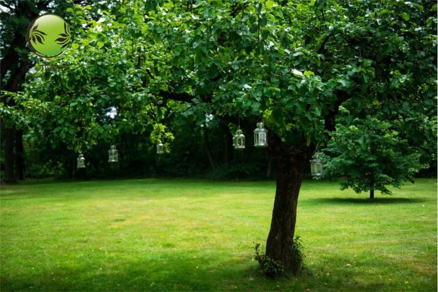 Lampiony na drzewie