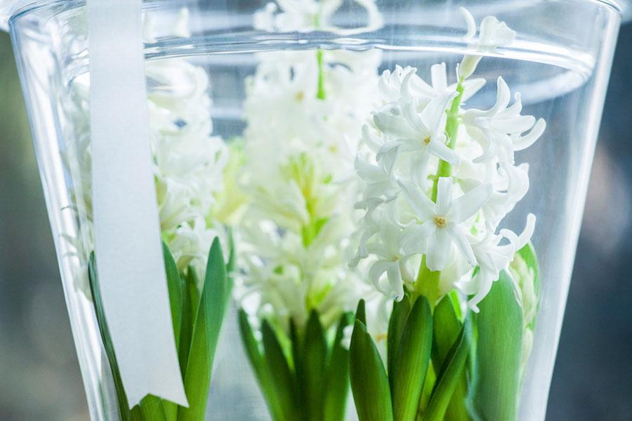 Jasne rośliny w szklanym wazonie