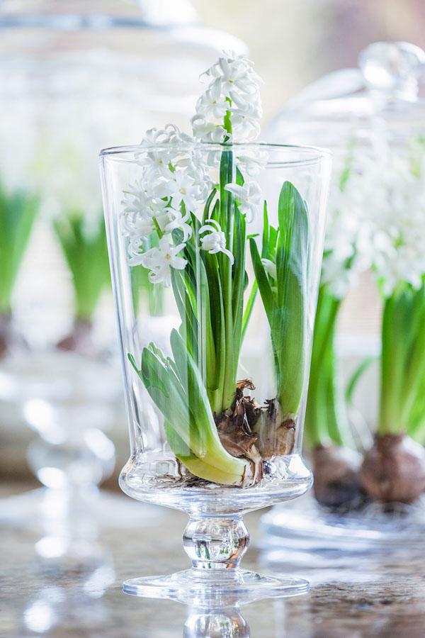 Kwiatki w szklanym wazonie