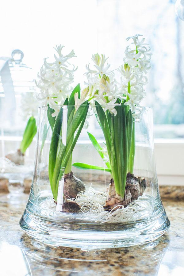 Białe kwiaty cebulkowe w szkle