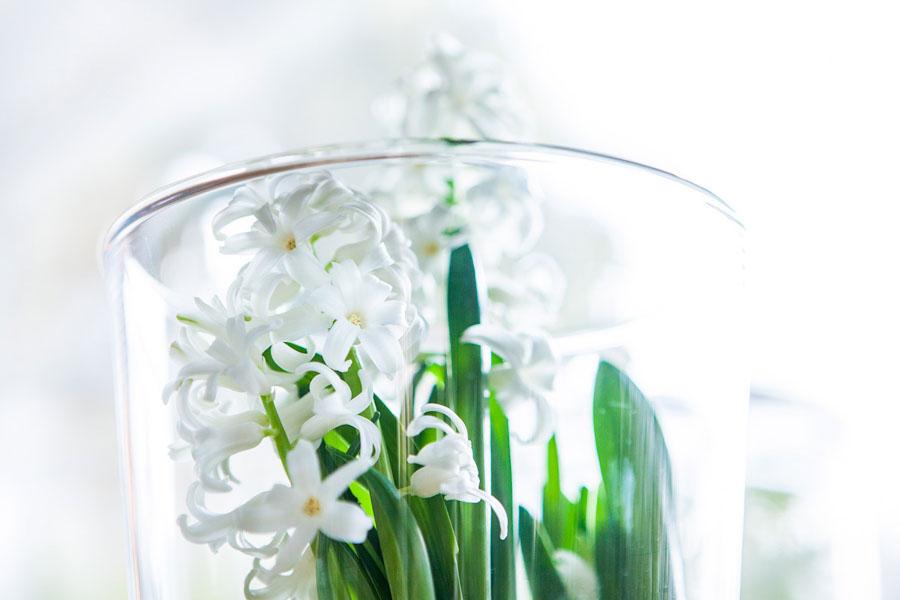 Białe kwiatki w szkle