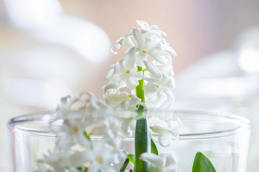 Kwiat wyrastający ze szkła